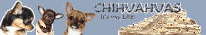 http://chihua-dogs.narod.ru/